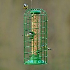 GBS Exclusive Classic Seed Feeder with Guardian - Medium