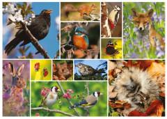 Great British Wildlife 1000 Pieces