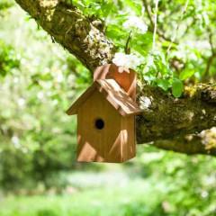 Chapelwood Nest Box Dark Wood