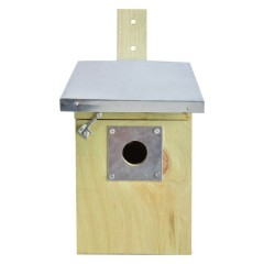 Fallen Fruits Nest Box Protection Plates - 27mm or 32mm