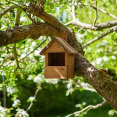 Robin Nest Box - Dark Wood