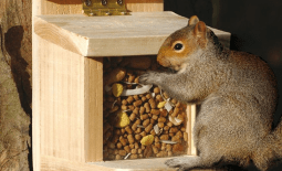 Squirrel Food and Feeders